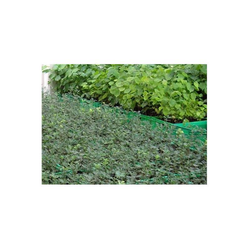 Acquisto querce roverella micorrize di tartufo nero for Piante acquisto