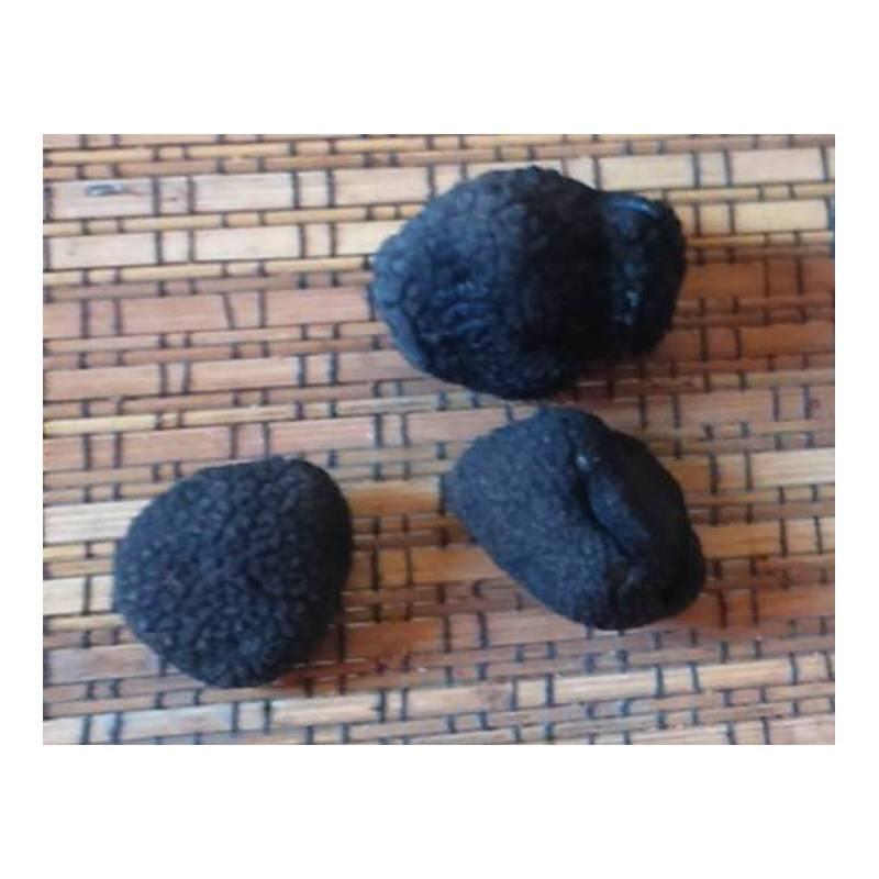 acheter truffes noires. truffe fraiche. melanosporum