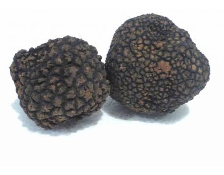 acheter la truffe d'été. truffe fraîche. aestivum. voir les prix. cuisine de haute qualité delicatessen